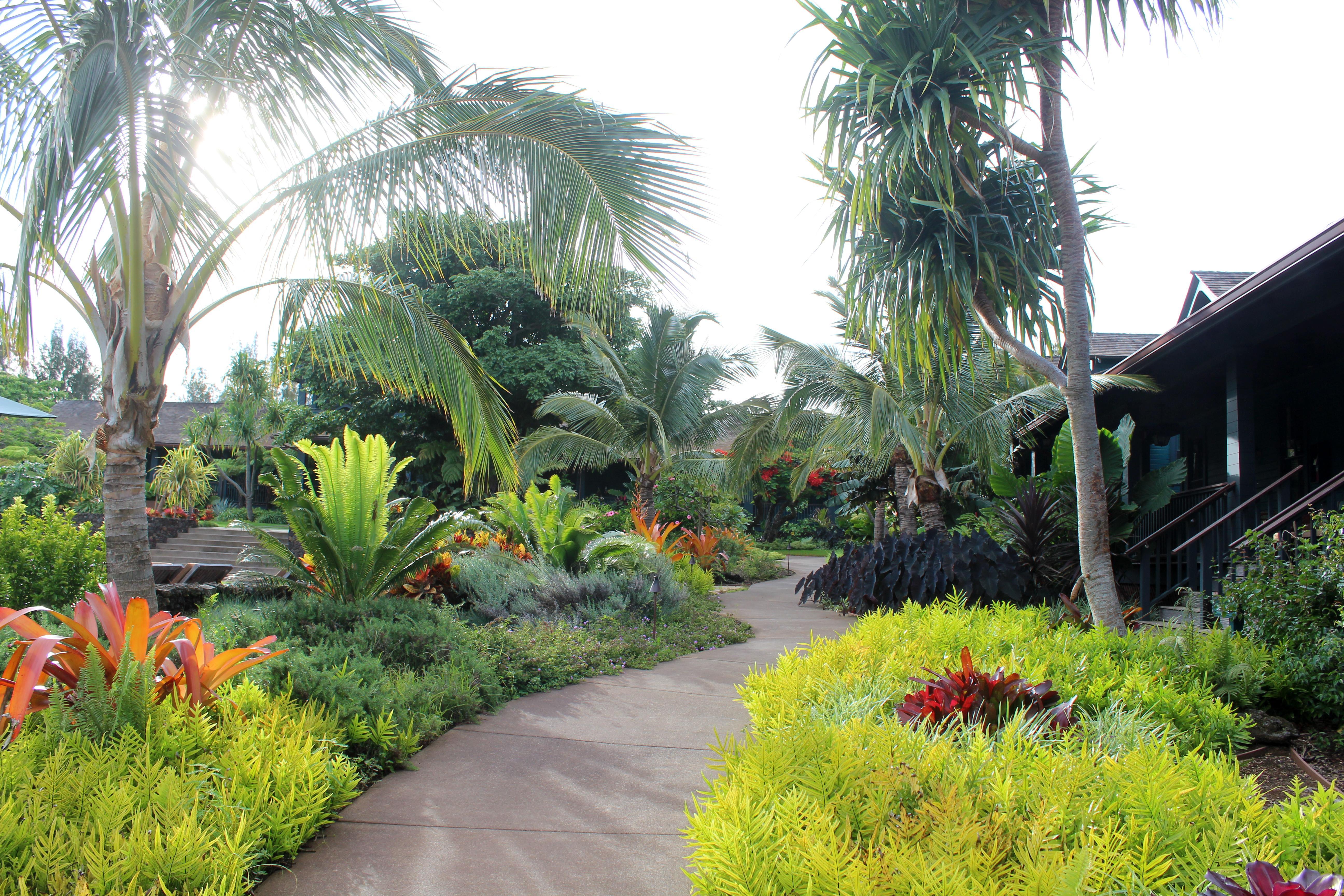 100 tropical garden ideas queensland home small for Qld garden design ideas