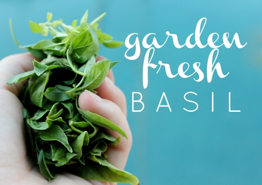 Garden Fresh Basil + a recipe for Tomato Salad with Basil Vin | via Tsiporah Blog